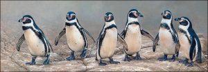 pinguinos de peru