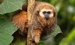 10 animales del Perú en peligro de extinción