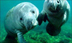 5 animales de la amazonia Peruana