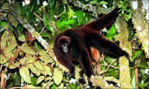animales de la amazonia peruana