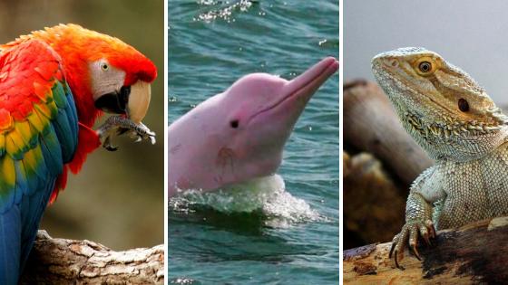 los animales exoticos del peru