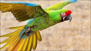 guacamayo ave exotica