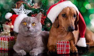 Cómo proteger mascotas en Navidad
