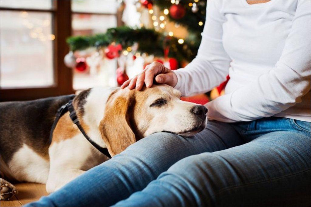cuidado de mascota en navidad