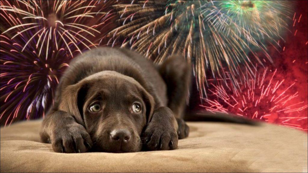 cuidado de perros en navidad ya año nuevo